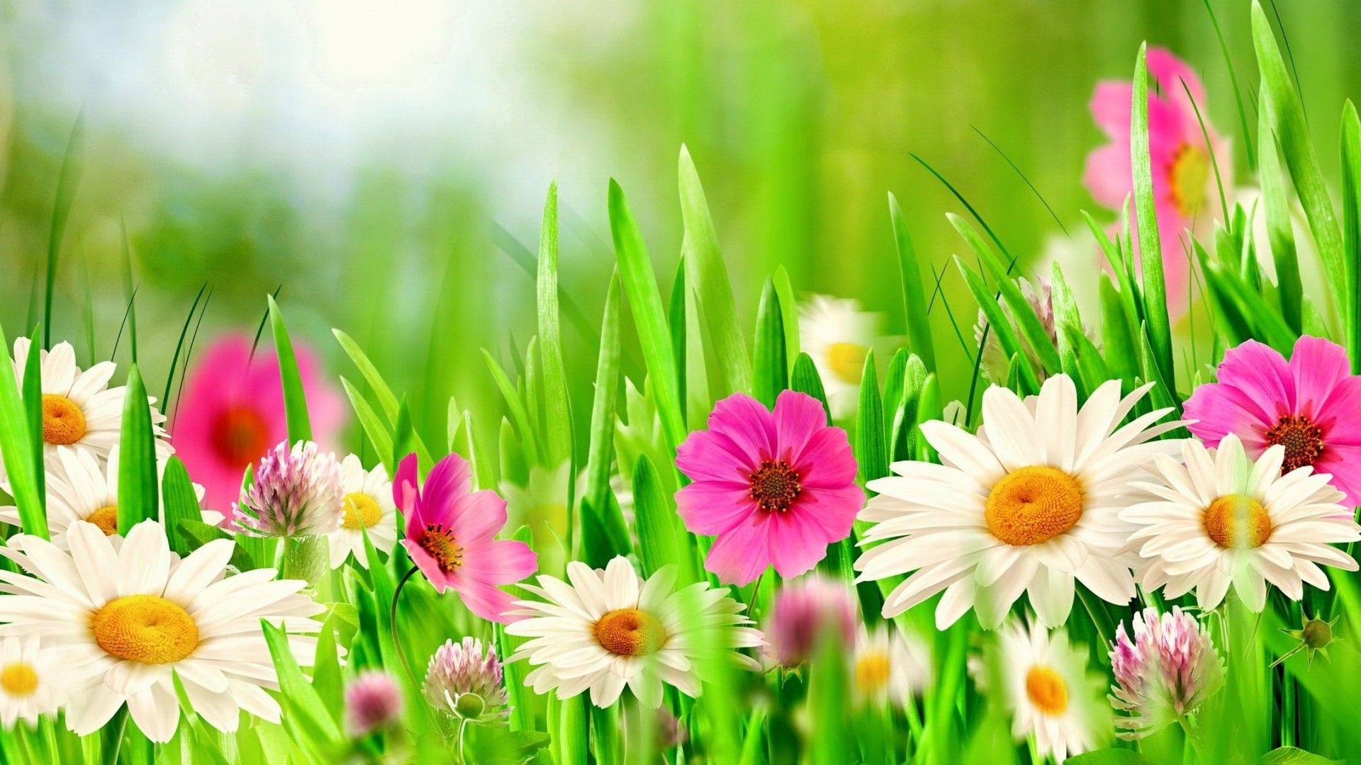Wallpaper HD Beautiful Spring Cover photos Spring flowers 1920x1080