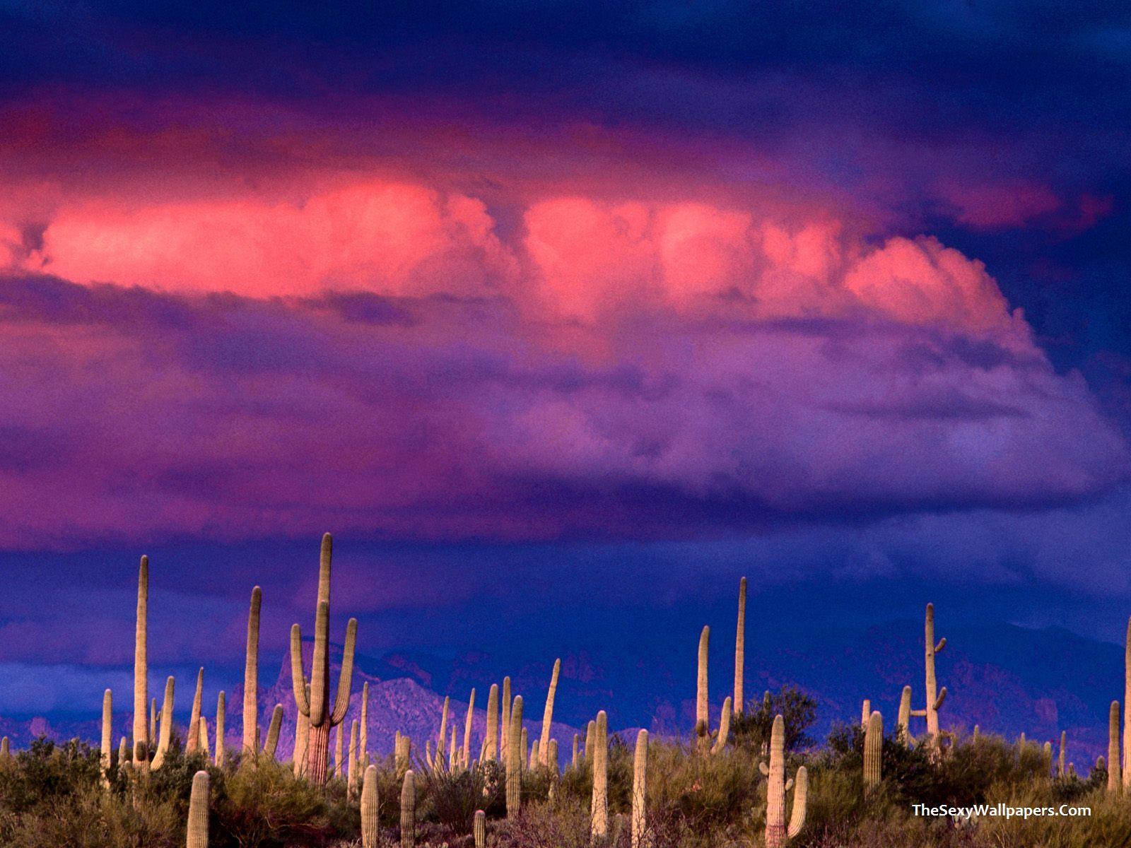 Wallpaper Saguaros and Spring Storm Saguaros and Spring Storm 1600x1200