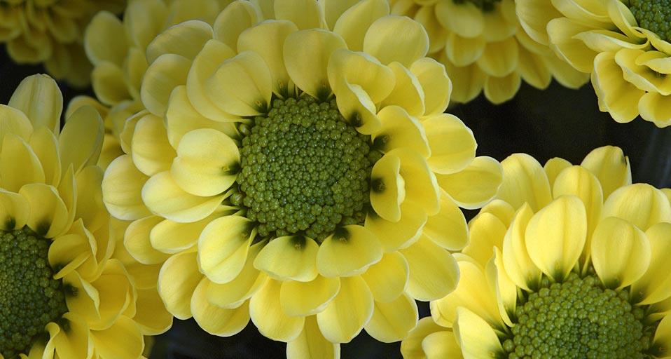 Bing Images   Cold Dew   Gerhard 958x512