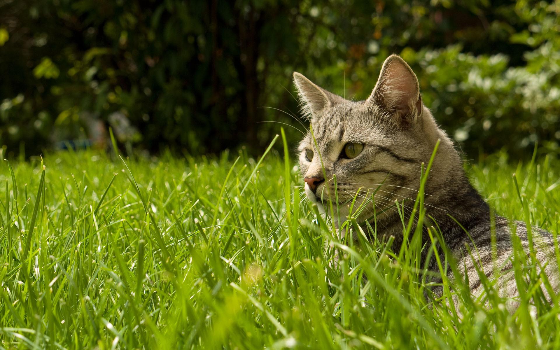 Котенок в траве  № 2954087 загрузить