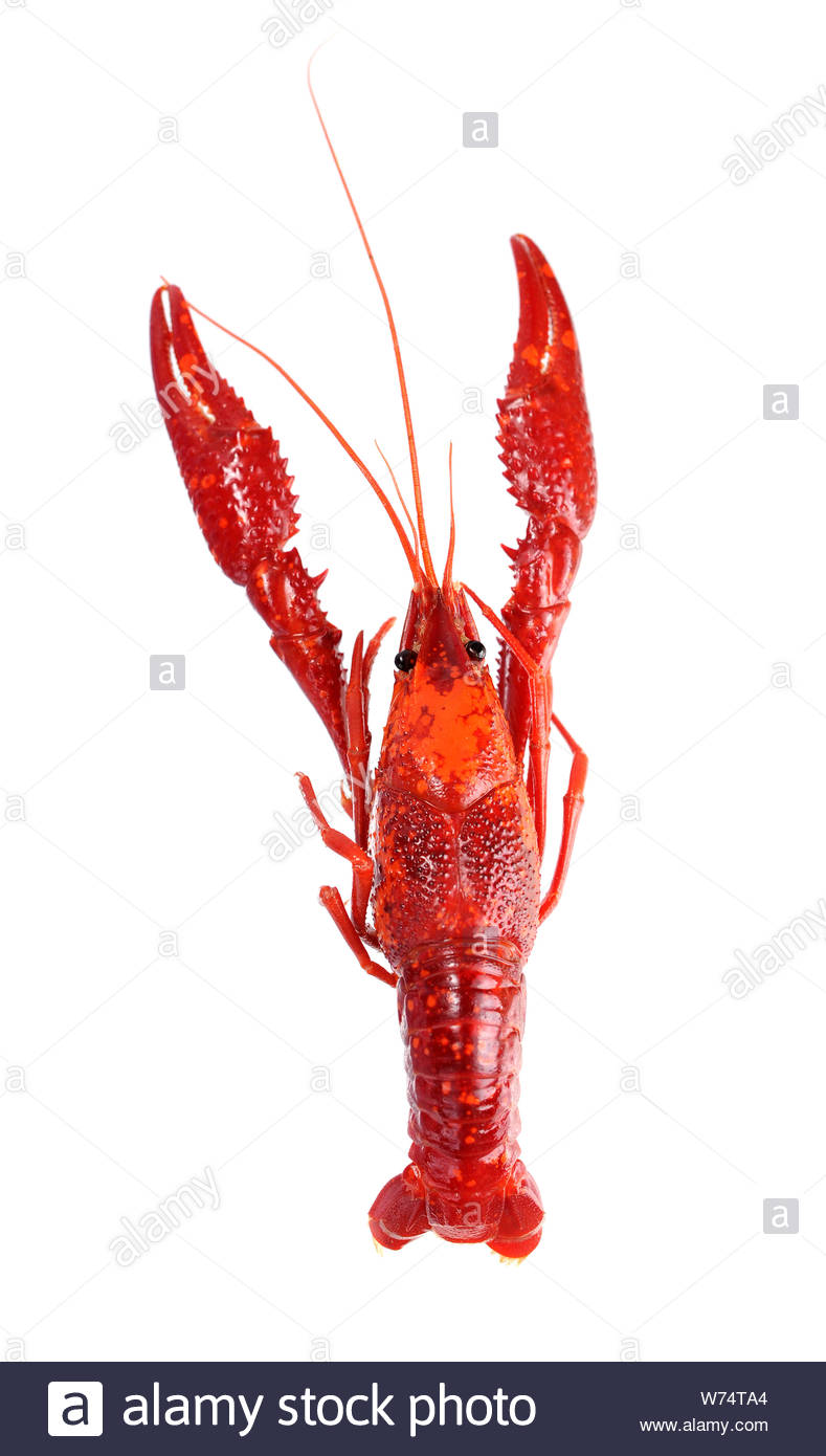 steamed crawfish isolated on white background Stock Photo 789x1390