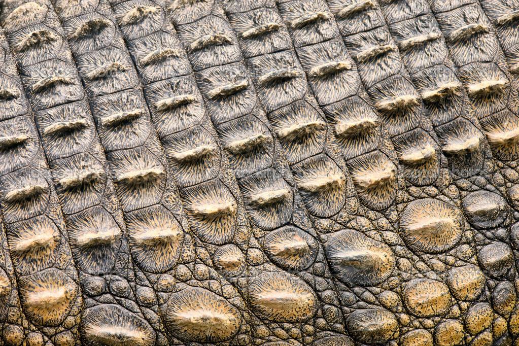 32 Crocodile Skin Wallpapers 1023x682