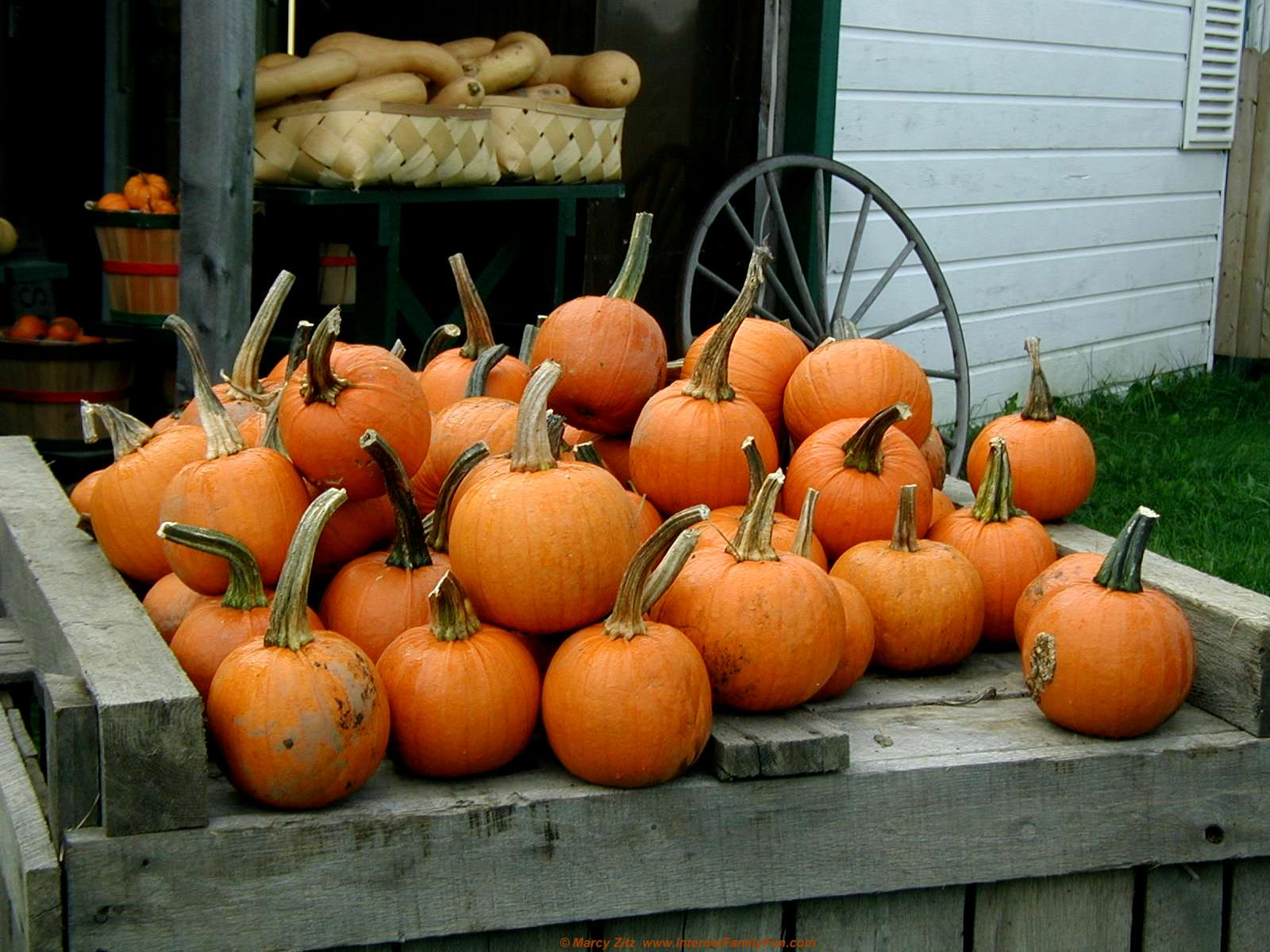 fall pumpkin wallpaper and screensavers wallpapersafari