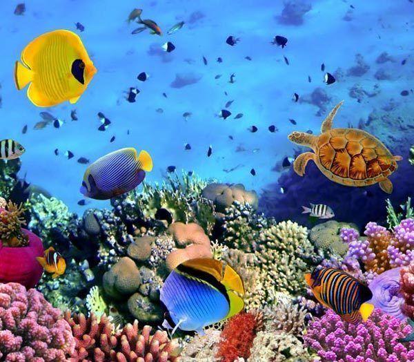 Deep Ocean Color World 3D Full Wall Mural Large Print Wallpaper Home 600x524