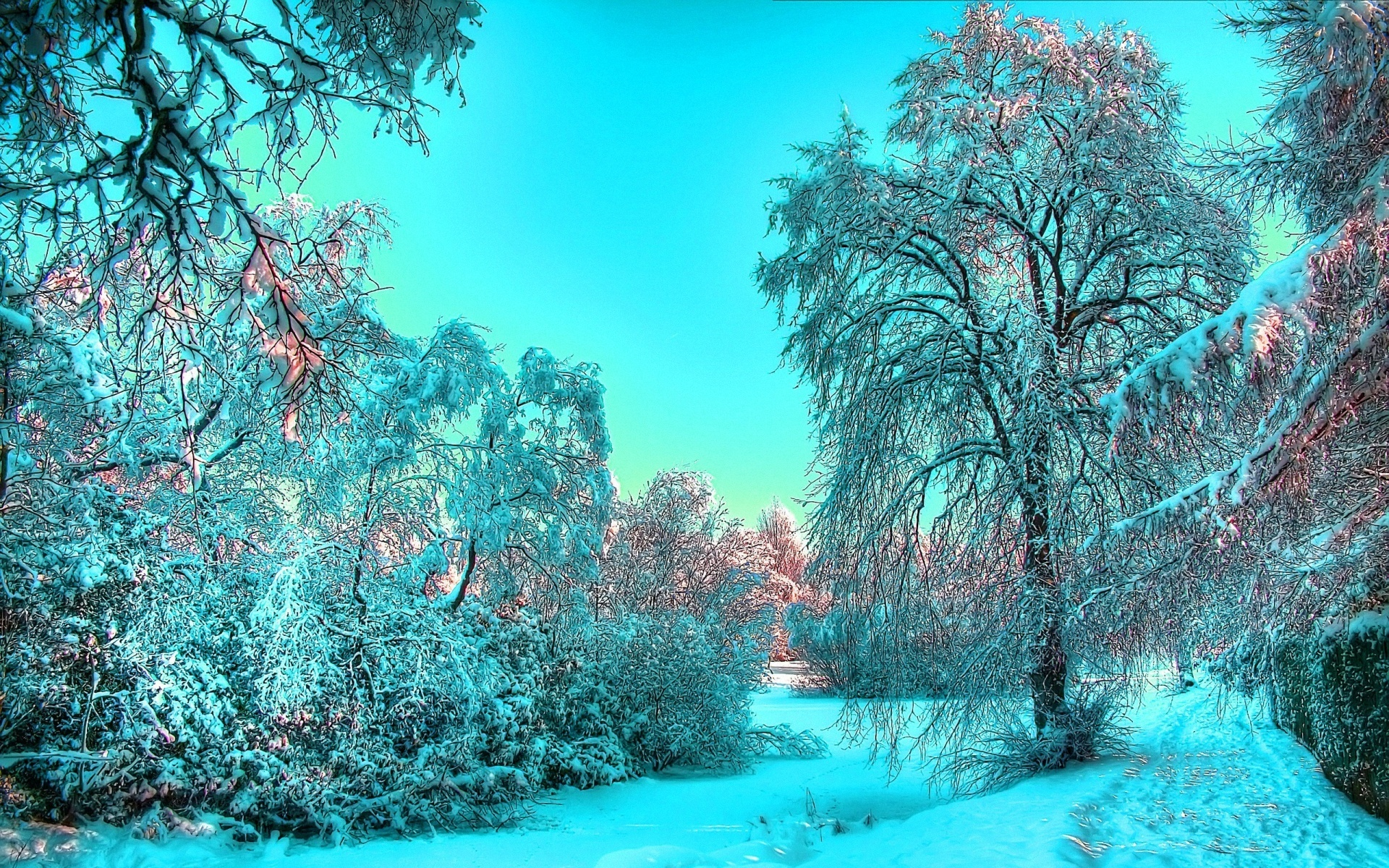 Winter High Definition Wallpapers In 1920X1200 Desktop Backgrounds 1920x1200