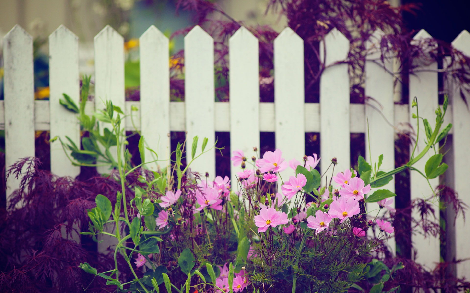 flower garden wallpaper desktop floral wallpapers 1920x1200 1920x1200