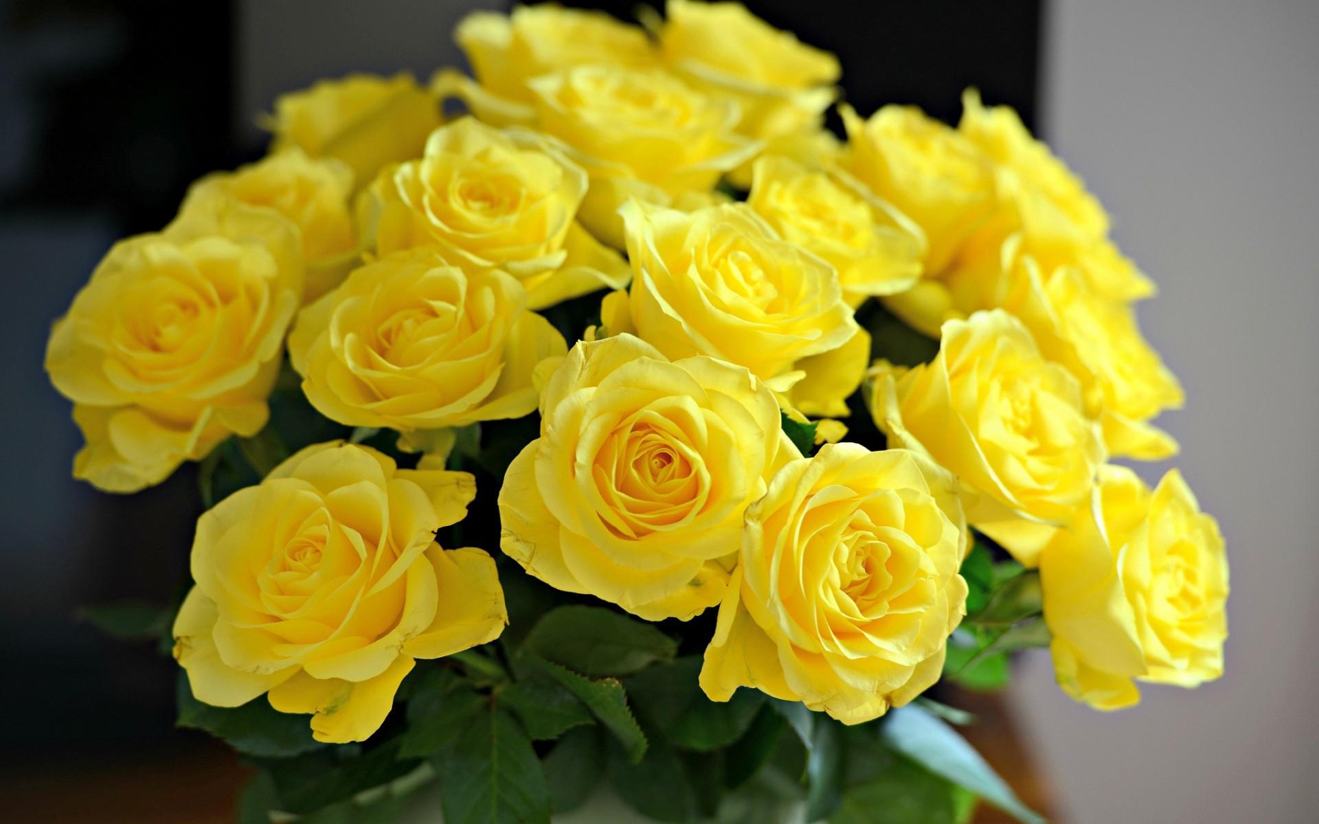 Hd wallpaper yellow rose - Yellow Rose Wallpapers Wallpapersafari