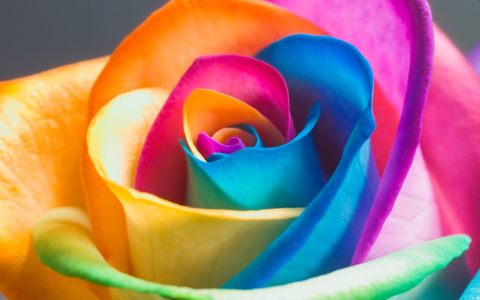 Rainbow Flowers 1600x1000
