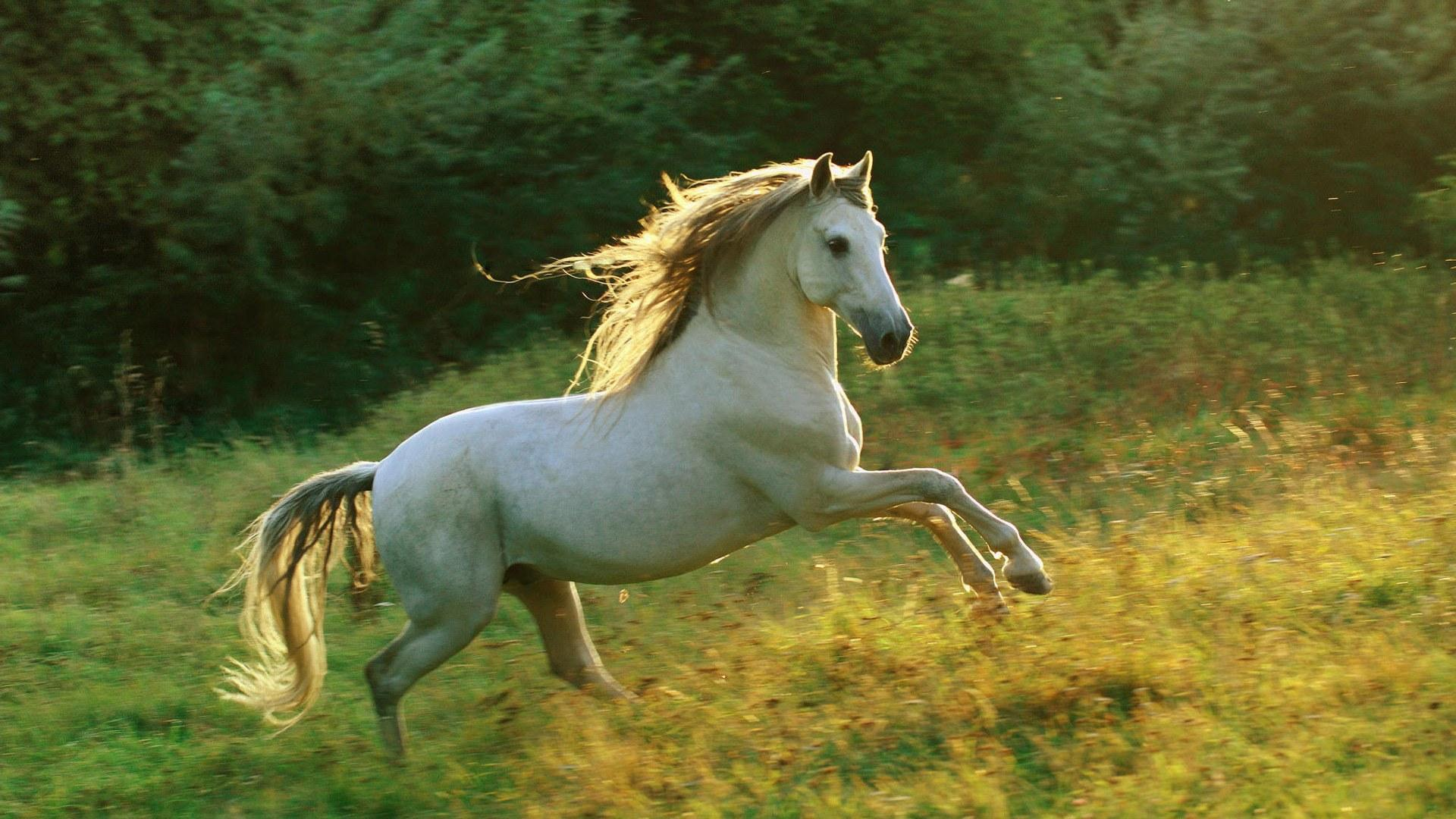 horse wallpapers category of hd wallpapers horse screensavers is 1920x1080