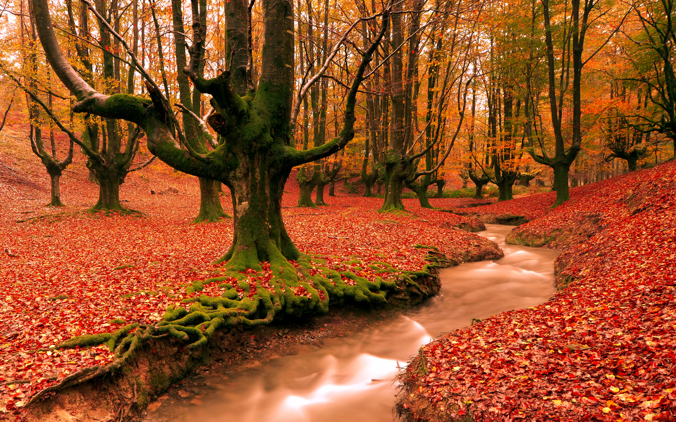 images of autumn desktop wallpapers free on latoro wallpaperhtml 2560x1600