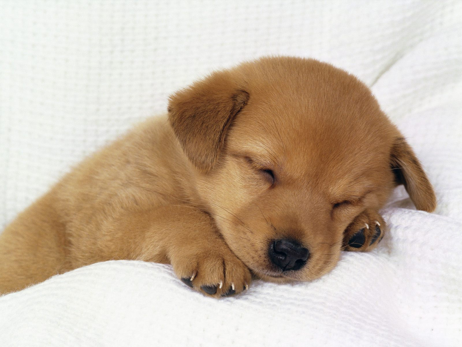 Download Dogs wallpaper Puppy 1 1600x1200