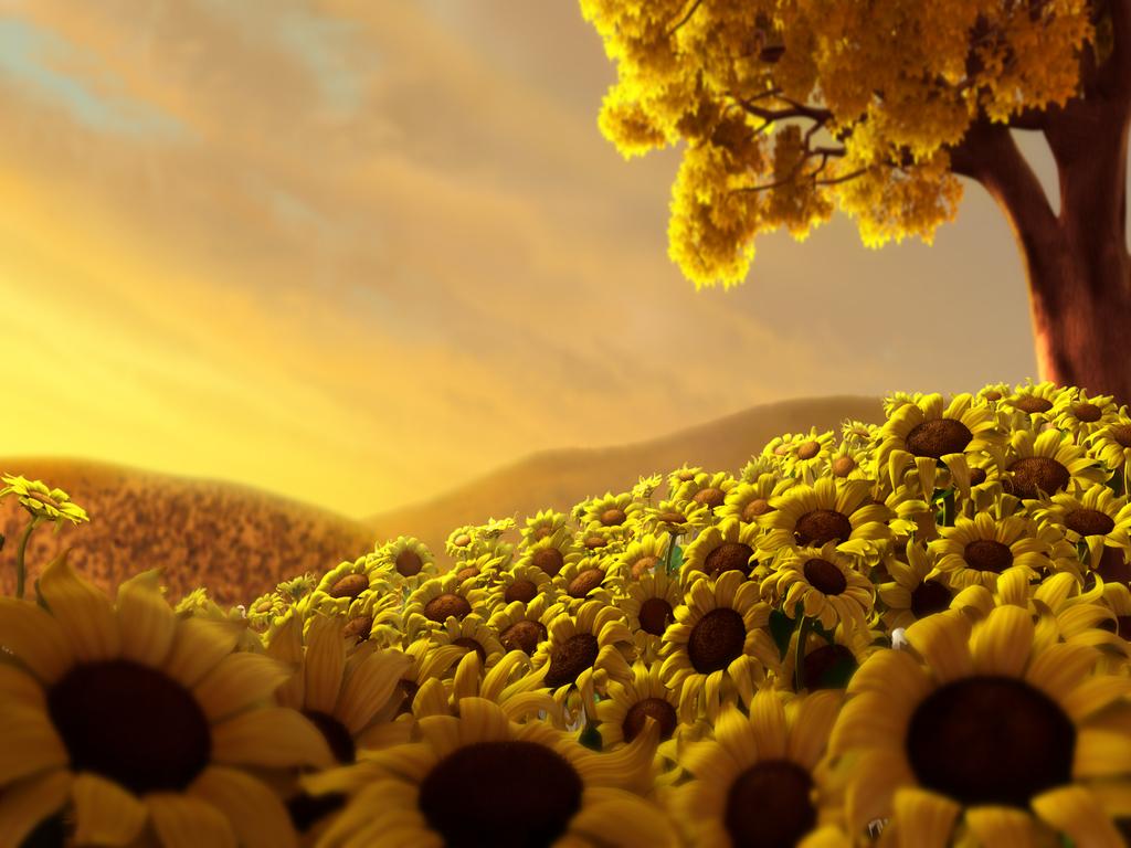 Contoh Wallpaper Gambar Bunga Cantik Kan 1024x768