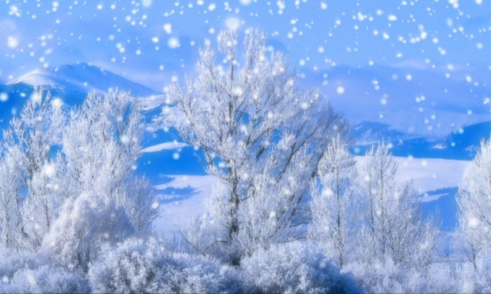 WinterScenes Snow Screensaver is a stunning screensaver that is 700x420