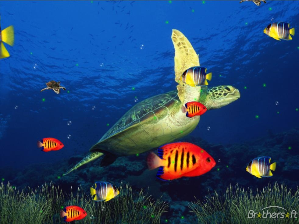 Marine Life Aquarium 3D Screensaver Marine Life Aquarium 981x735