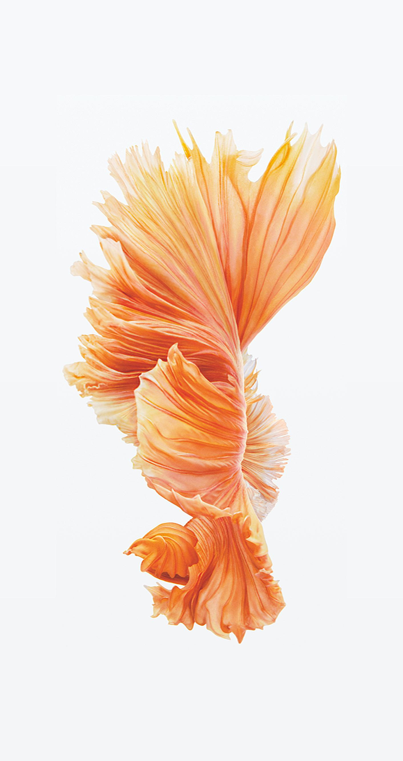 Download iPhone 6s6s Plus Wallpapers 1412x2662