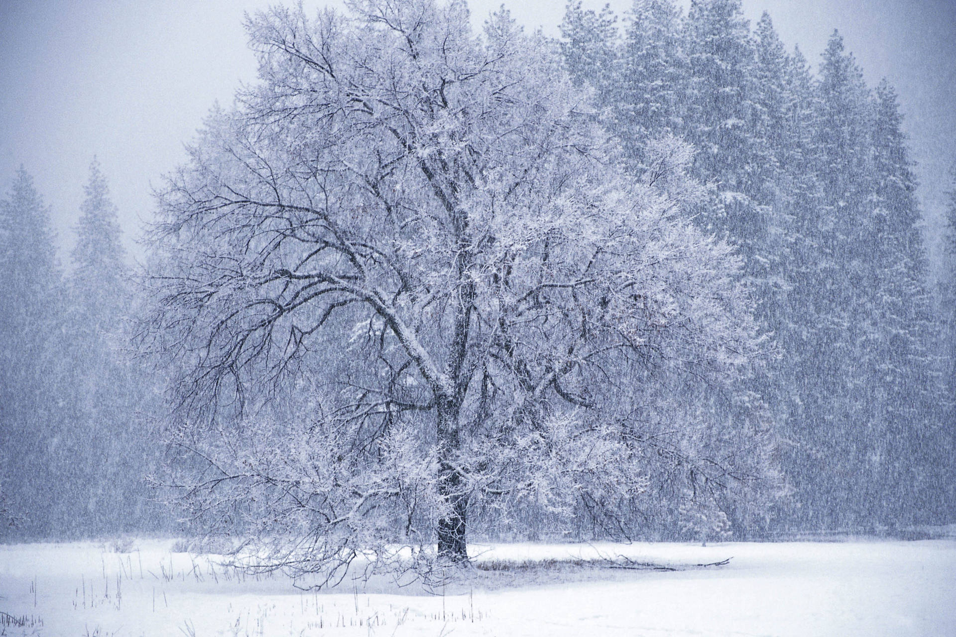 Winter tree snow storm Wallpaper 1444369814 1920x1280