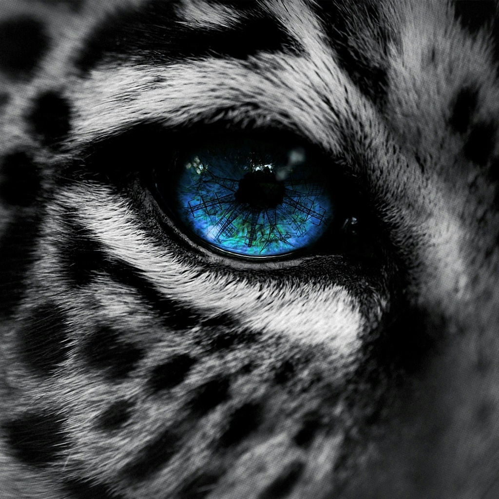 Snow leopard blue eye iPad Wallpaper and iPad 2 Wallpaper 1024x1024