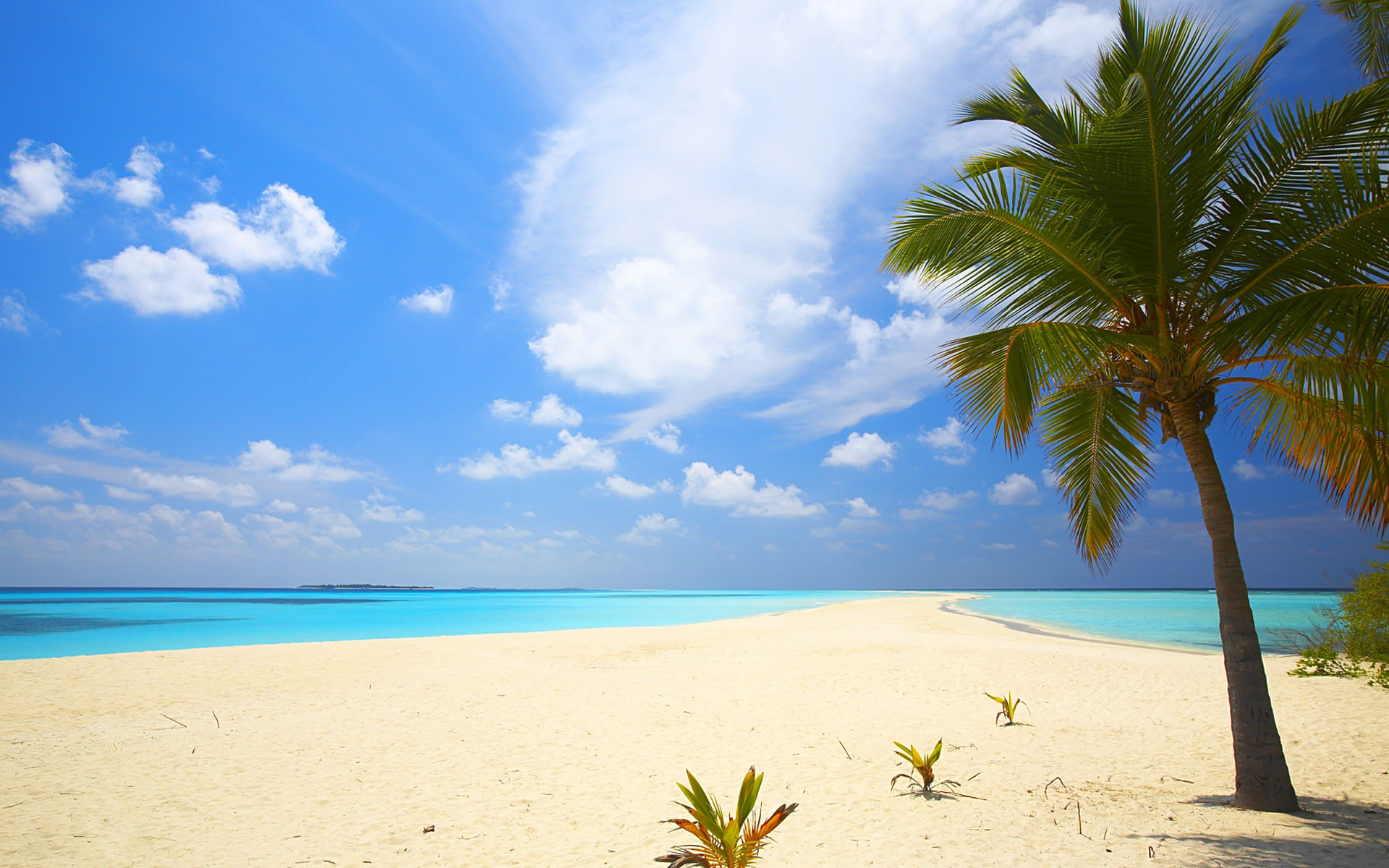 Goa Beach Parallax Hd Iphone Ipad Wallpaper: Apple Beach Wallpaper