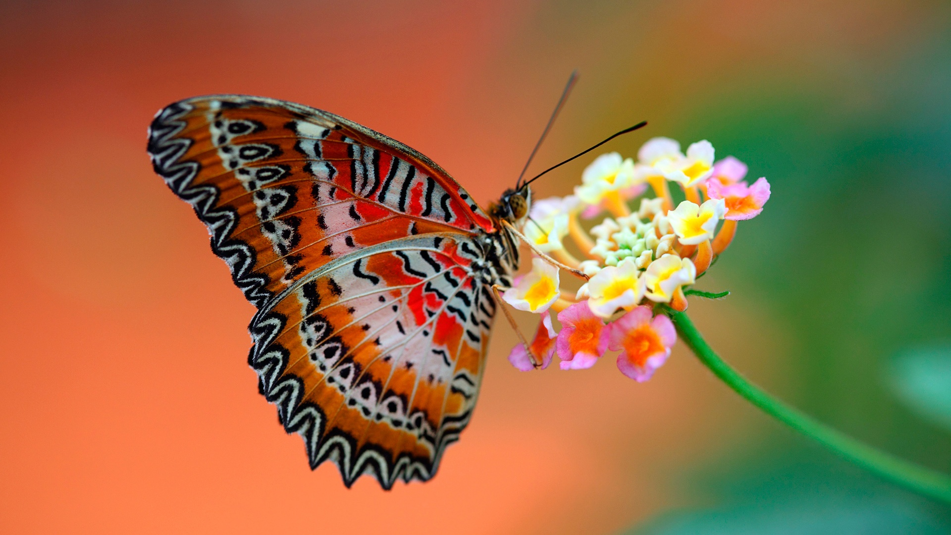 Cool butterfly hd wallpapers 1080p In Wallpapers Image 1920x1080