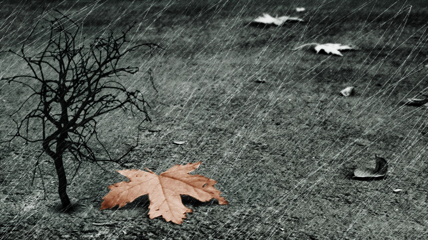 wallpapers leaf tree rain 3d photo on the desktop pictures 3d 1366x768