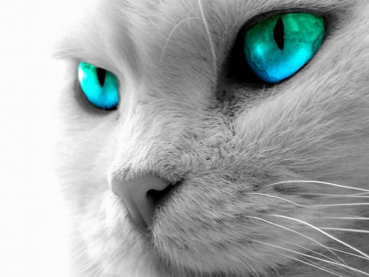 Cat Eyes Wallpapers Blue Cat Eyes Yellow Cat Eyes Green Red Cats 1200x900