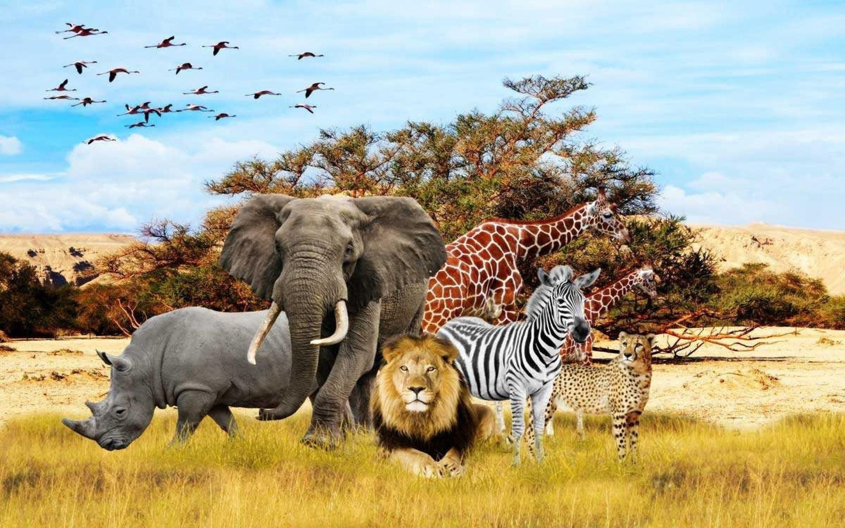 African Animals Wallpapers   Top African Animals Backgrounds 2880x1800
