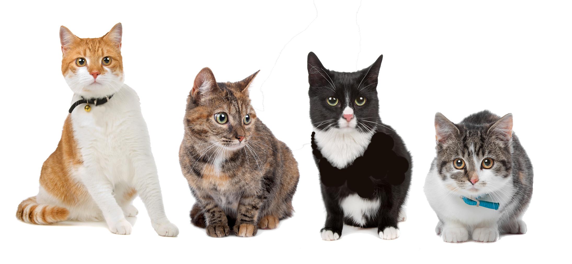 Warrior Cats Backround