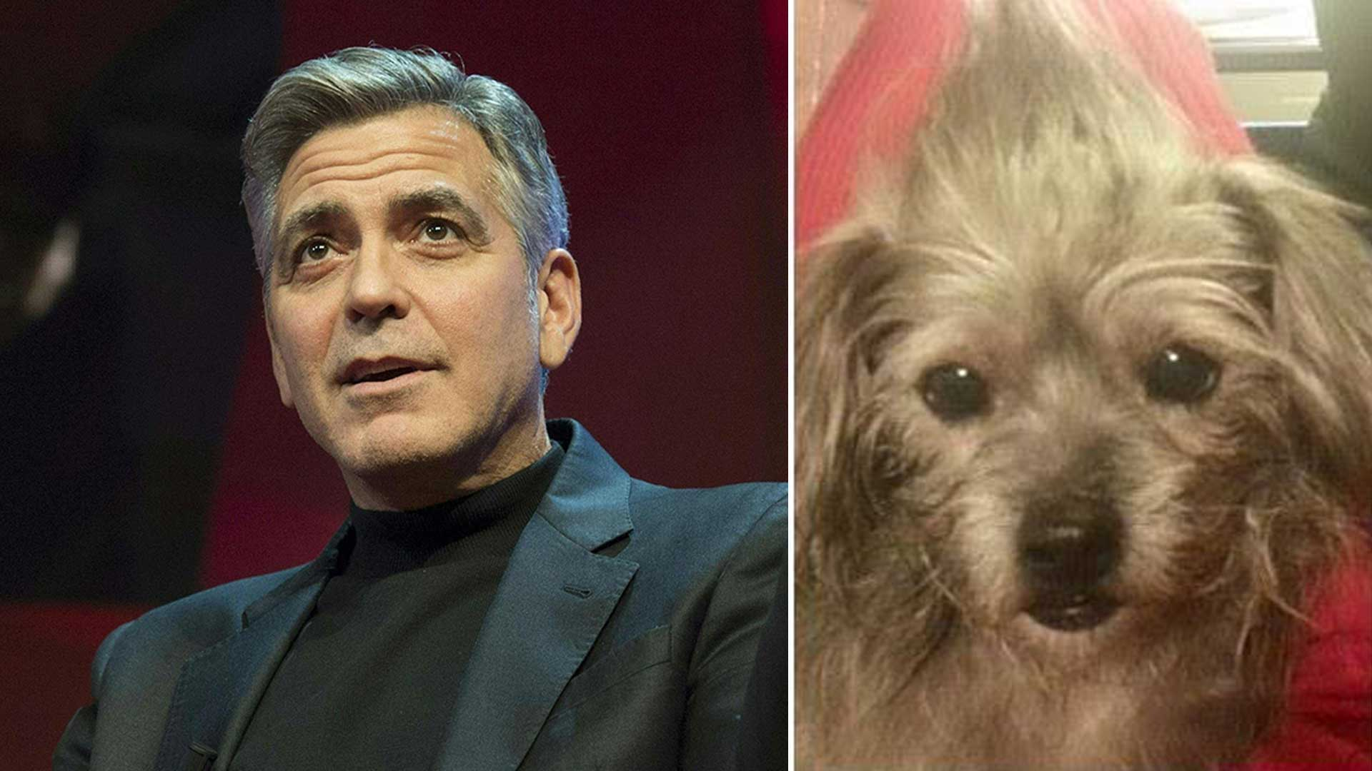 George Clooney helps parents adopt rescued dog named Nate 1920x1080
