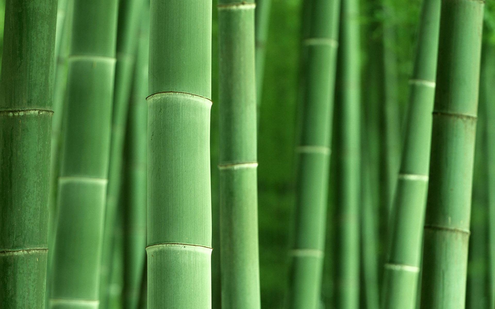 Bamboo Desktop Wallpaper