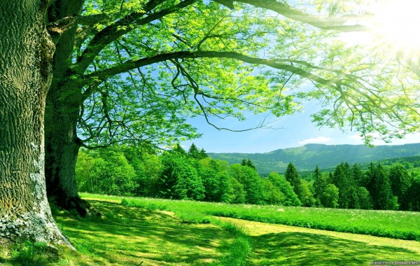 47+] 8K Nature Wallpaper on WallpaperSafari