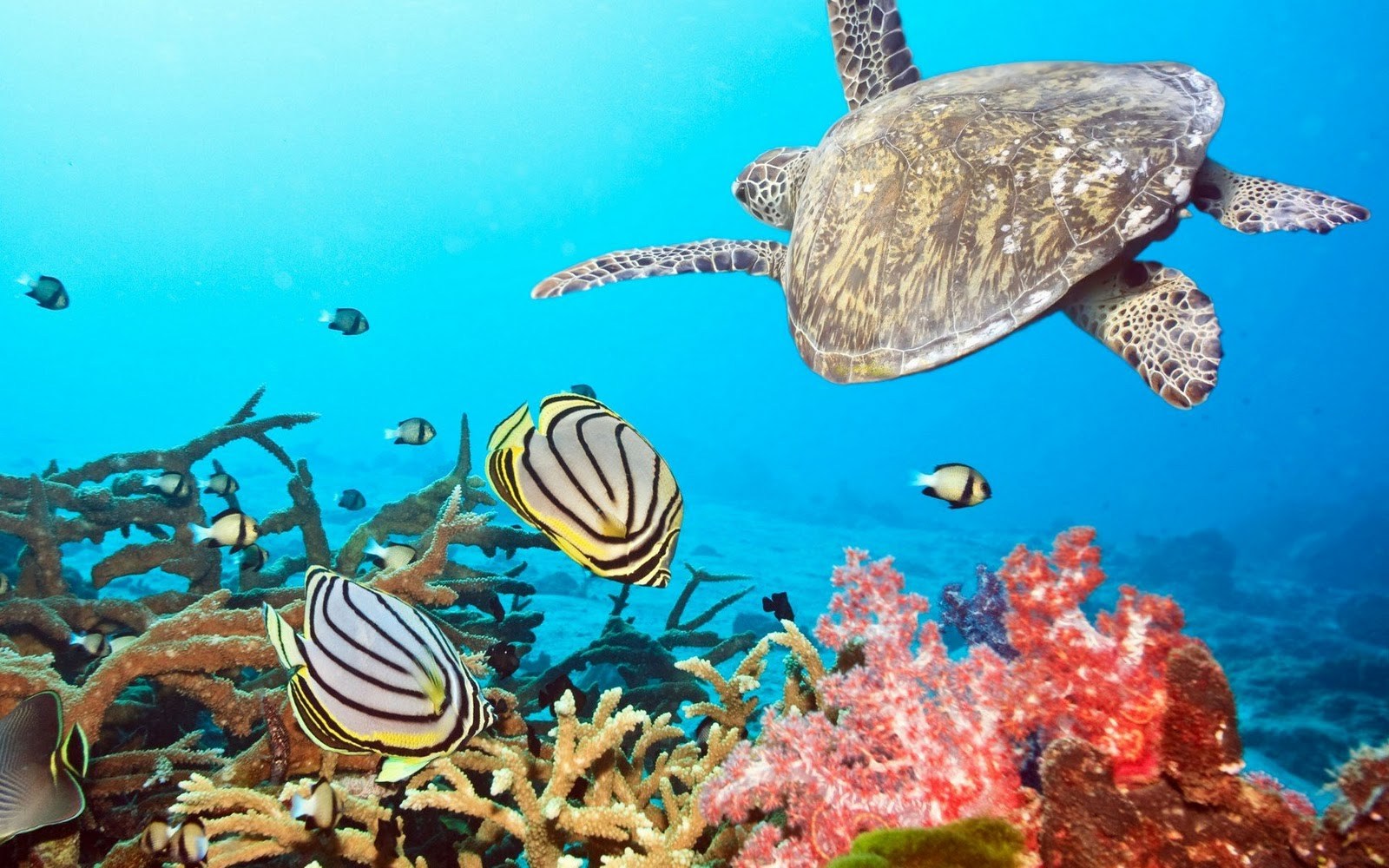 ocean plants ocean fish underwater wallpaper ocean screensaver 1600x1000