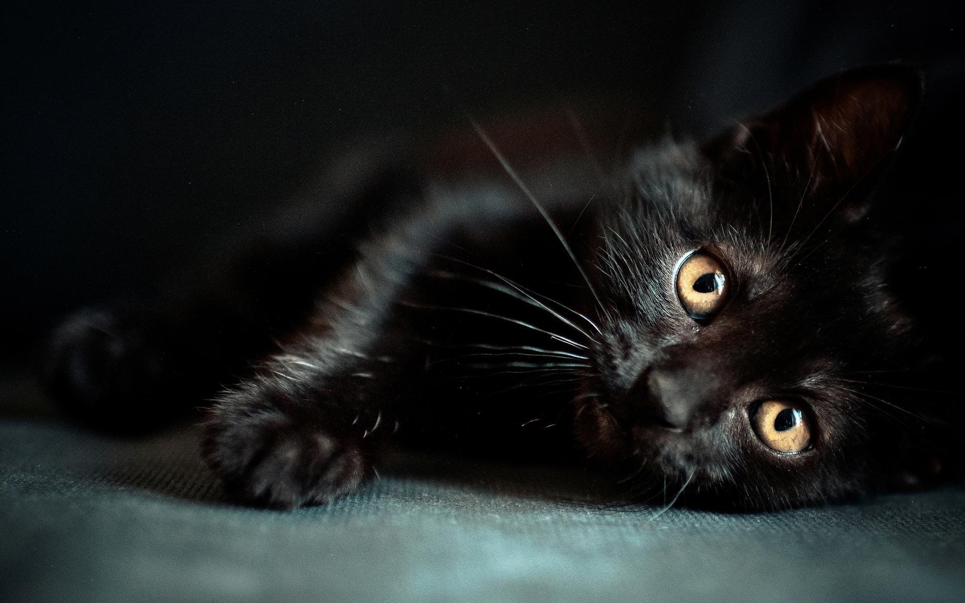 Wallpapers Black Cat 1920x1200