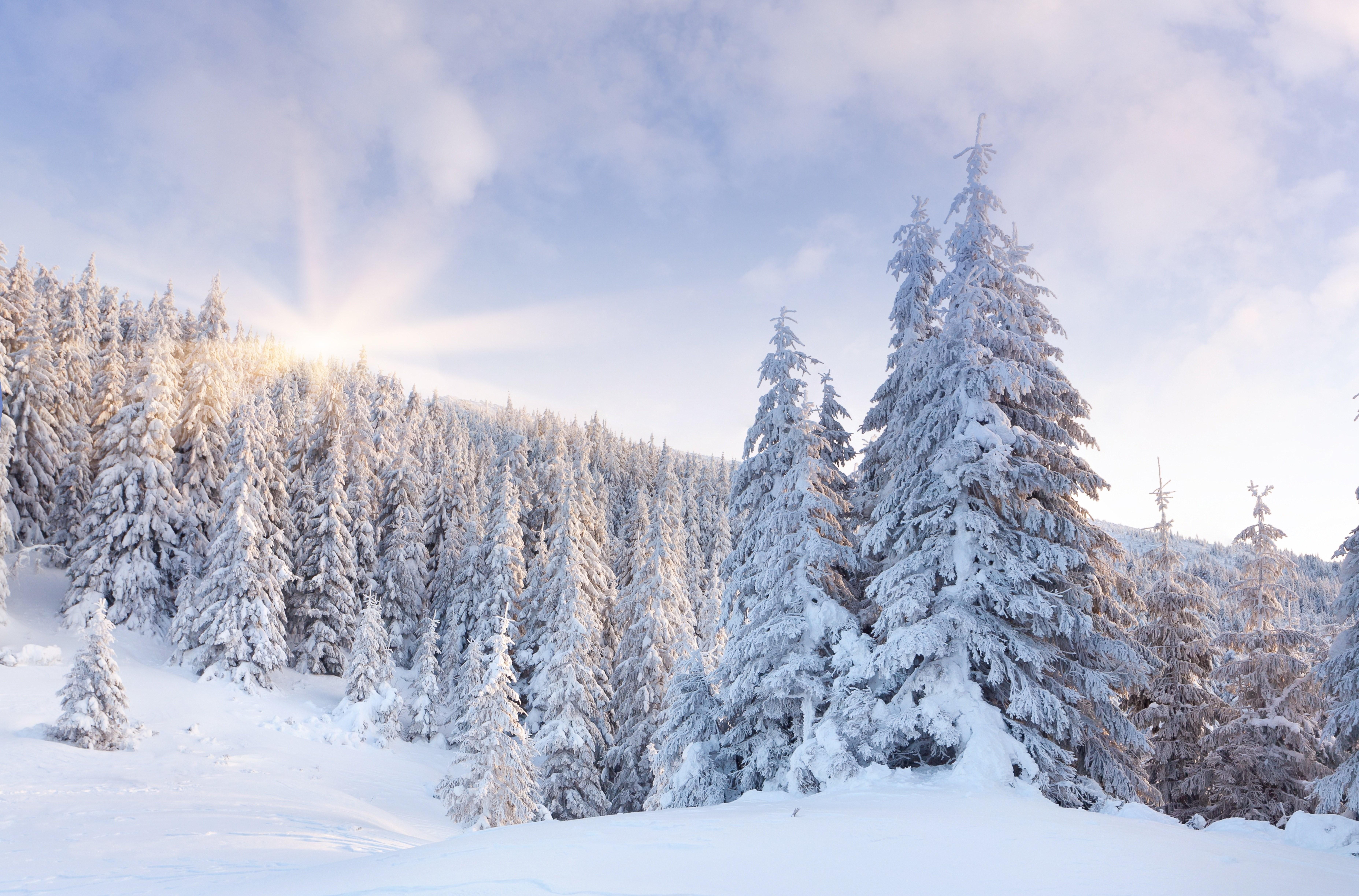 Free Download Macbook Snow Winter Wallpaper Hd Landscape Images Naturefree 7420x4893 For Your Desktop Mobile Tablet Explore 65 Winter Wallpaper Free Free Winter Wallpaper Backgrounds Winter Wallpaper Free Winter