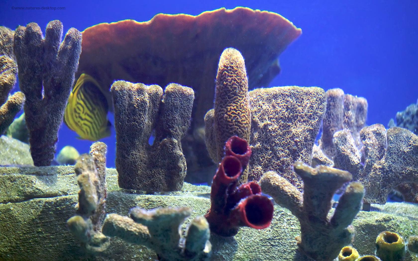 Fish Tank 859   HD Desktop Wallpaper HD Wallpapers Download 1680x1050