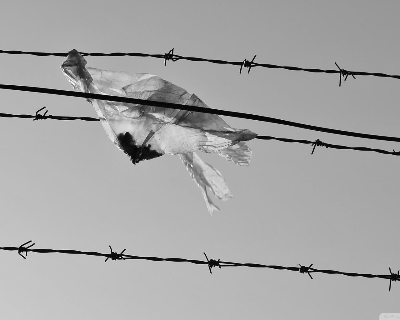 FREEDOM ISN T FREE WALLPAPER   140848   HD Wallpapers 1280x1024
