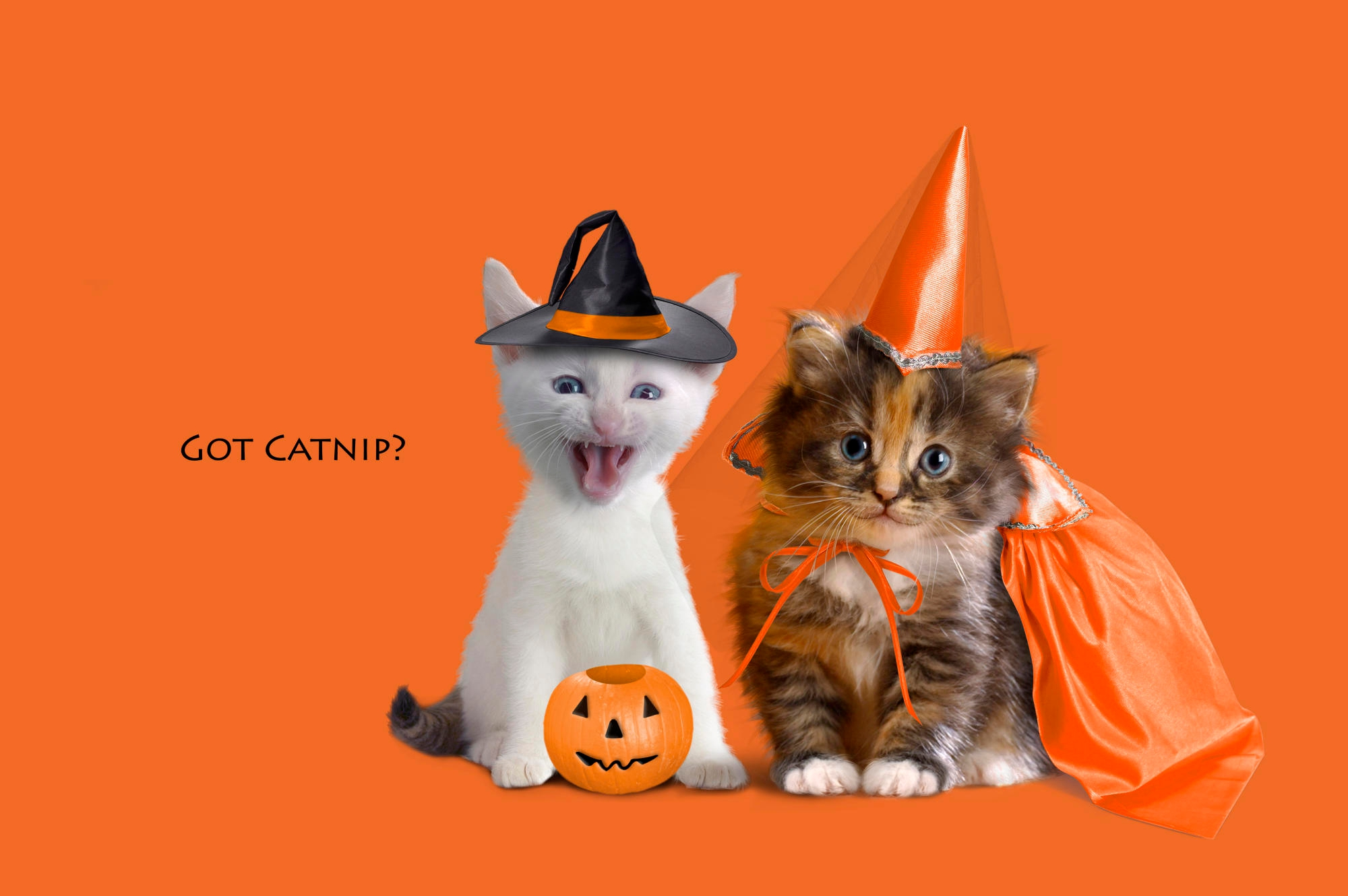 Kittens dressed up for Halloween funny picsco 2000x1330