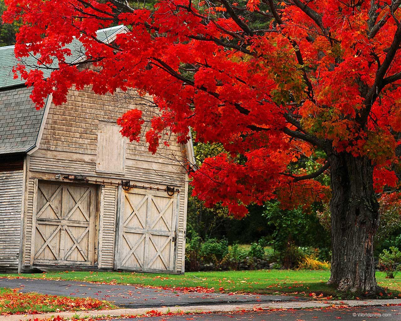 autumn ny   Autumn Photography Desktop Wallpapers 17667 Views 1280x1024