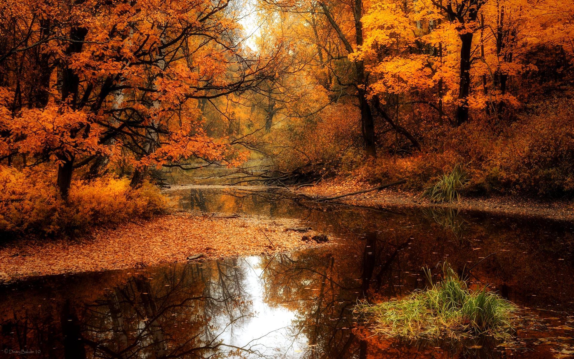 Autumn Forest Desktop Wallpaper - WallpaperSafari