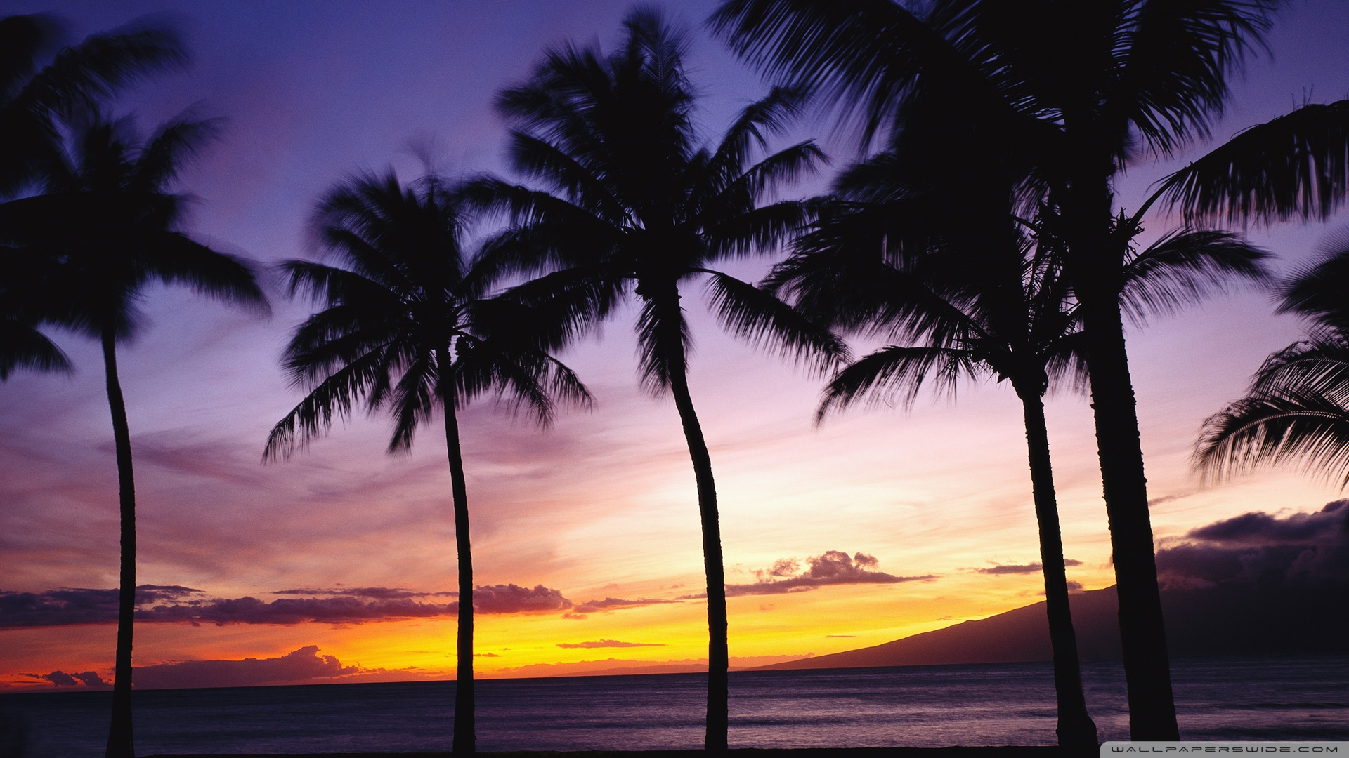 Palm Trees Sunset Wallpaper 1920x1080 Palm Trees Sunset 1920x1080