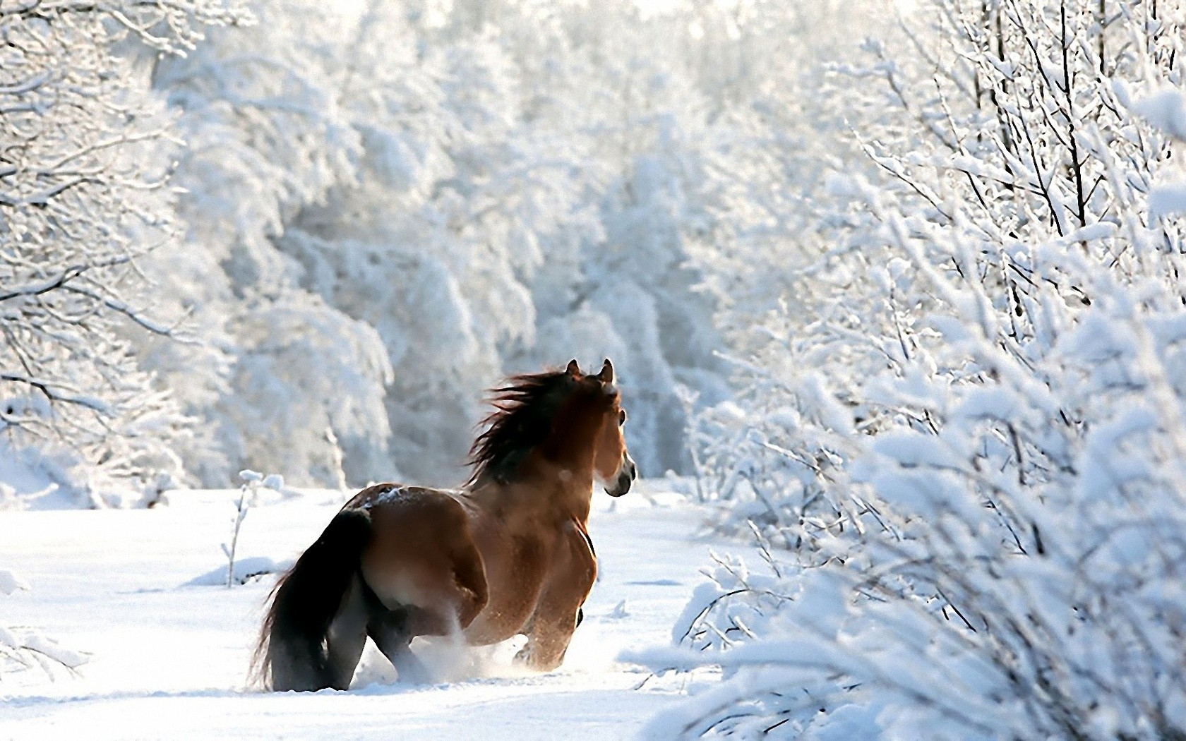Nature winter snow horses wallpaper 1680x1050 224435 WallpaperUP 1680x1050