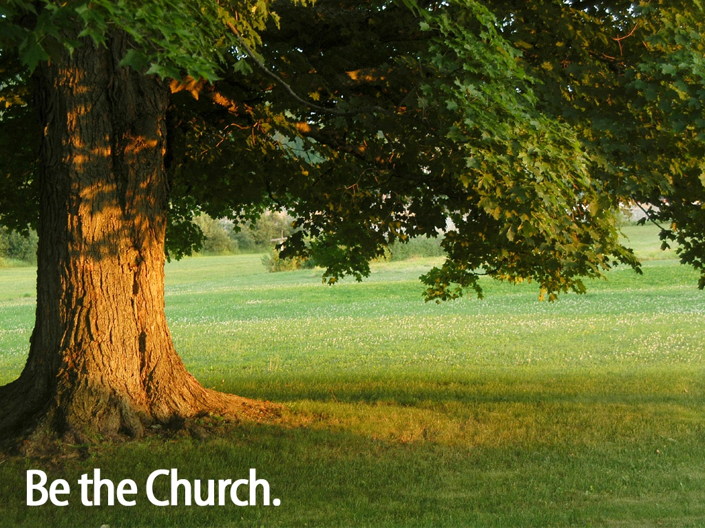 the church   The tree Wallpaper   Christian Wallpapers and Backgrounds 1024x768