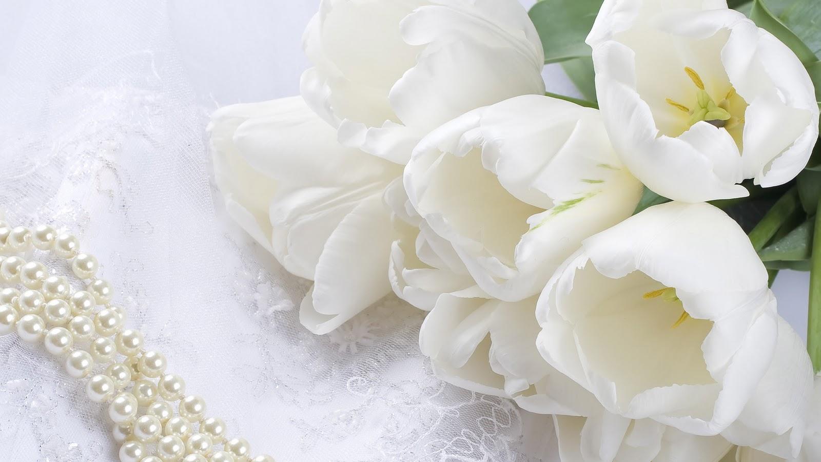 White Flower Wallpaper Wallpapersafari