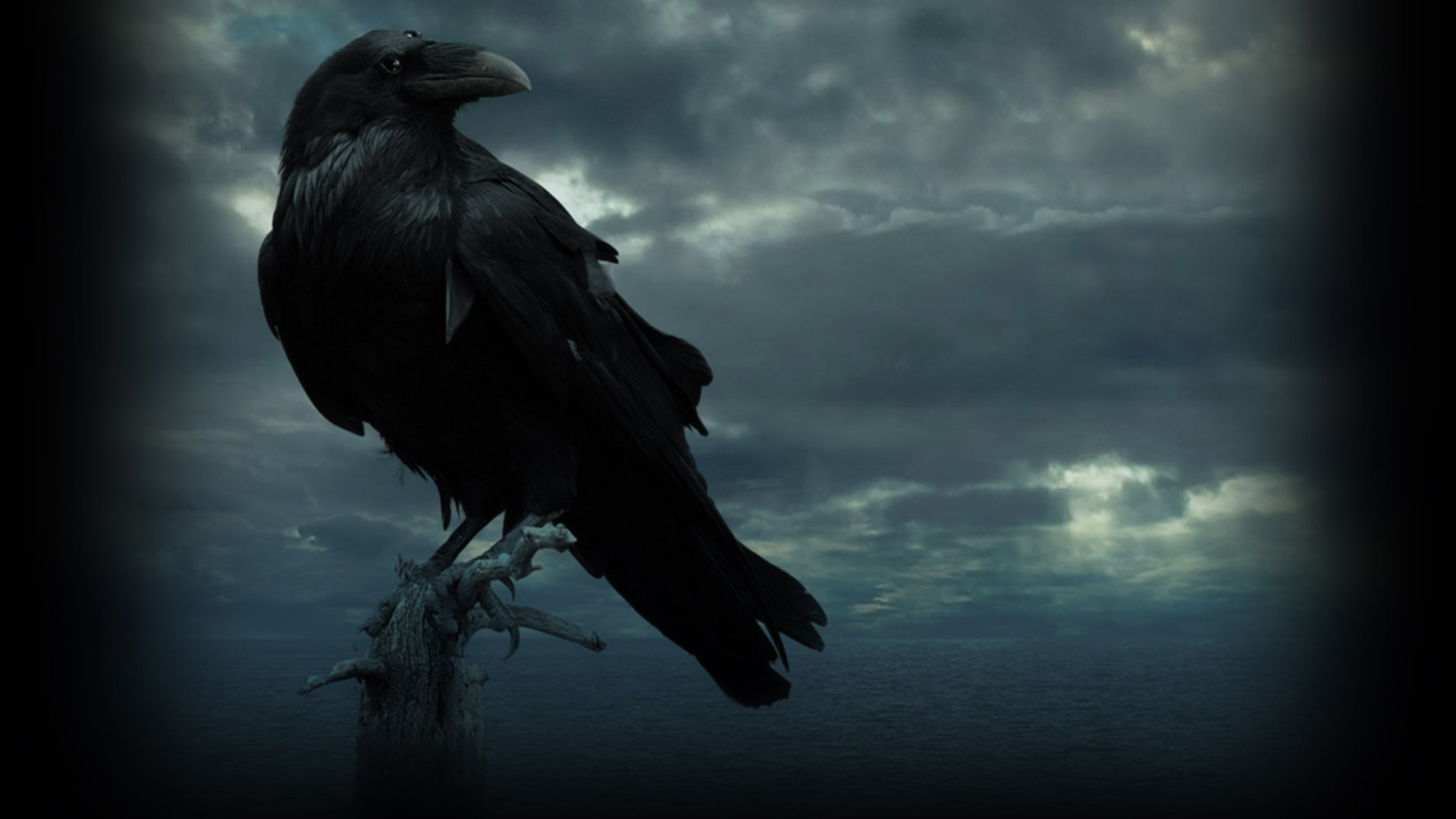 Raven Wallpapers HD Backgrounds WallpapersIn4knet 1920x1080