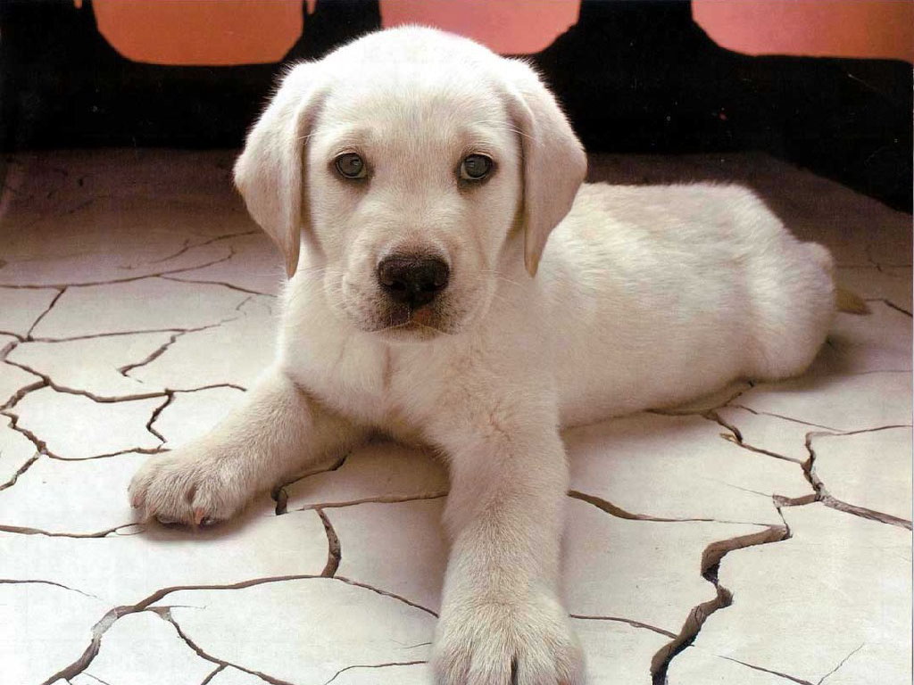 Dogs Food Stuff Cute Puppy Wallpapers 1024x768