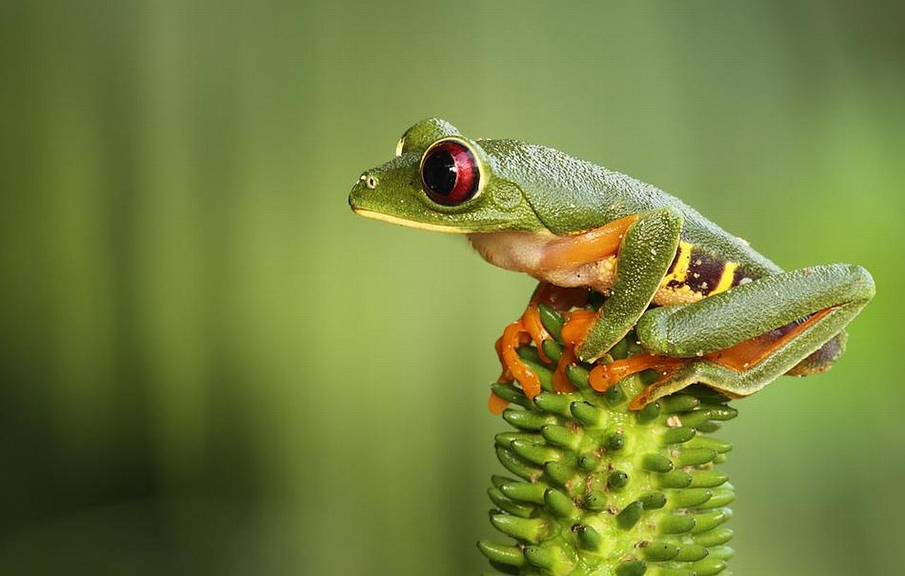 cute little frog Wallpaper Background 3715 1280x815