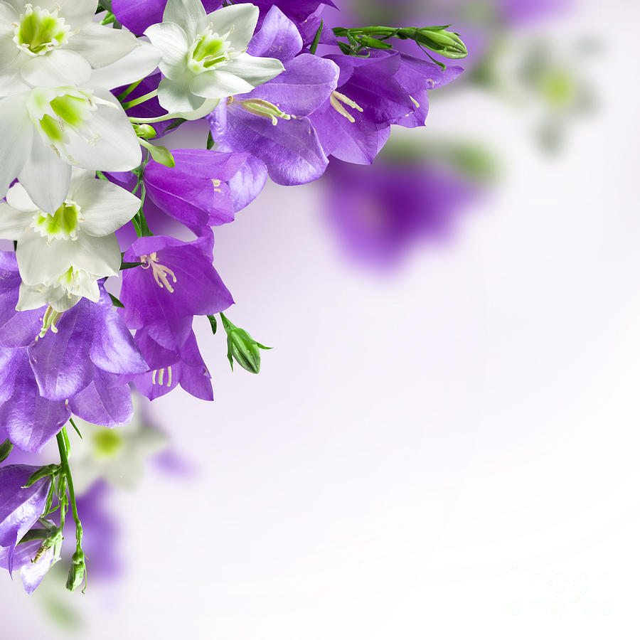 Free Download Url Httpwwwsmscscomphotopurple Flower Wallpaper