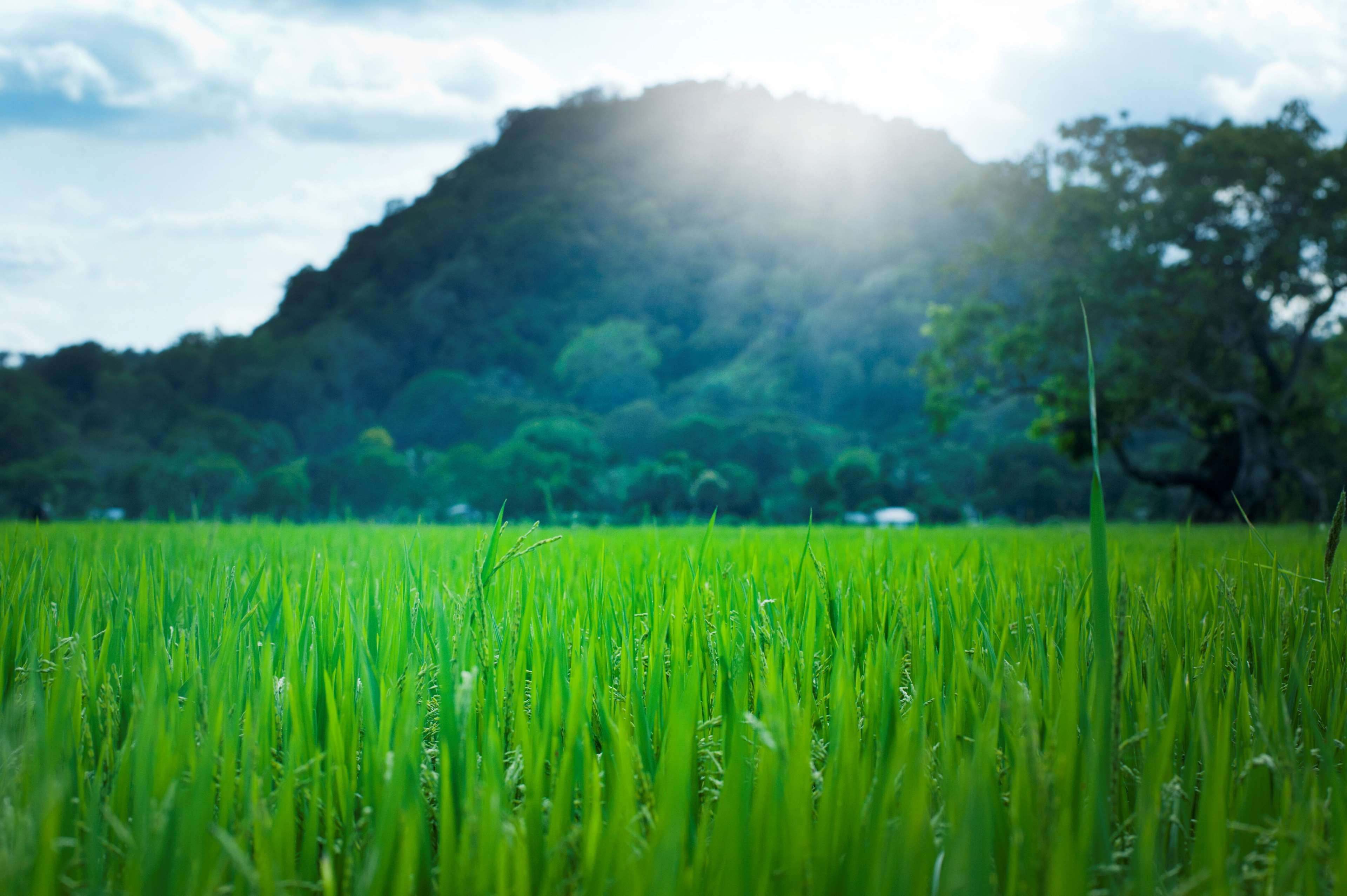 agriculture asian countryside crop cropland environment farm 3840x2555