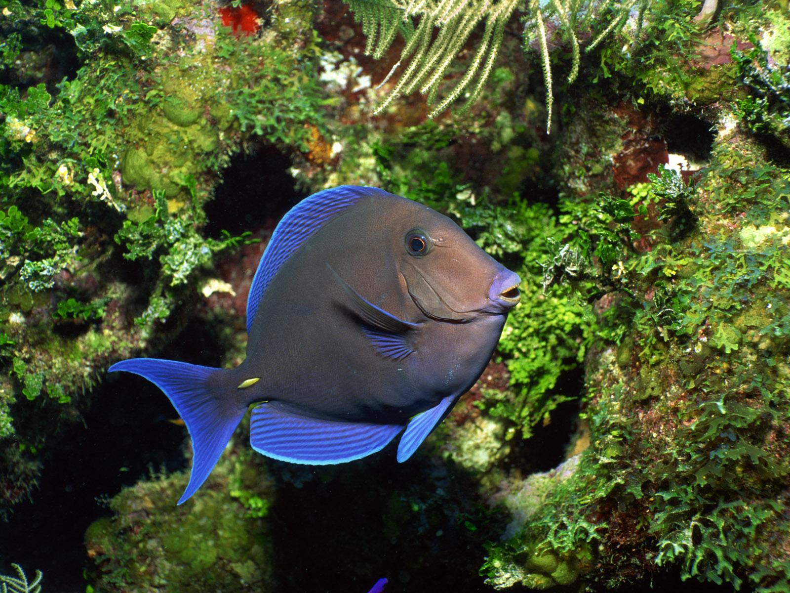48 Wallpaper Fish Swimming On Pc On Wallpapersafari