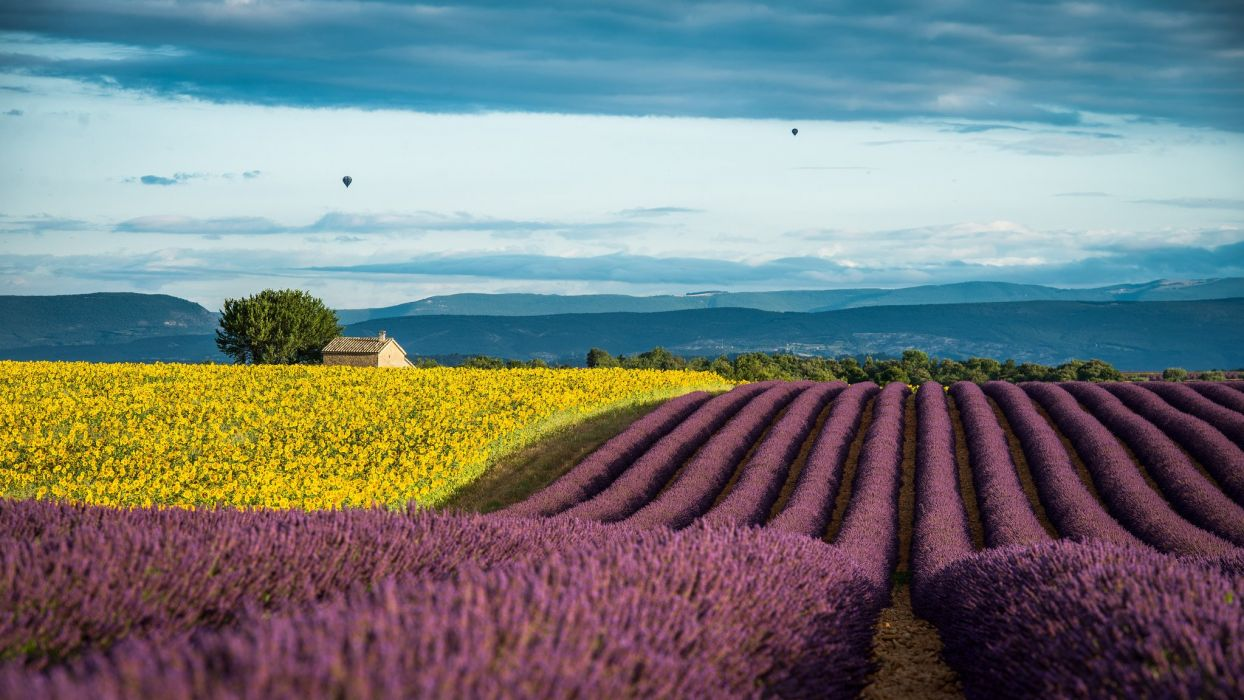 Lavender France Provence field wallpaper 2048x1152 636022 1244x700