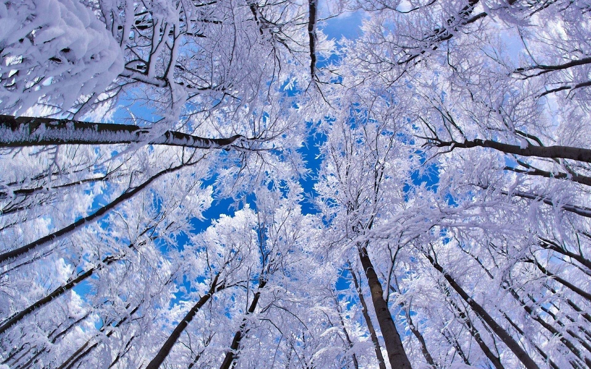 Frosted Aspen Tree HD wallpaper 1920x1200